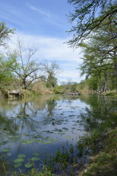 Jpeg Photo Download 218 Lily Pads - Texas Hill Country