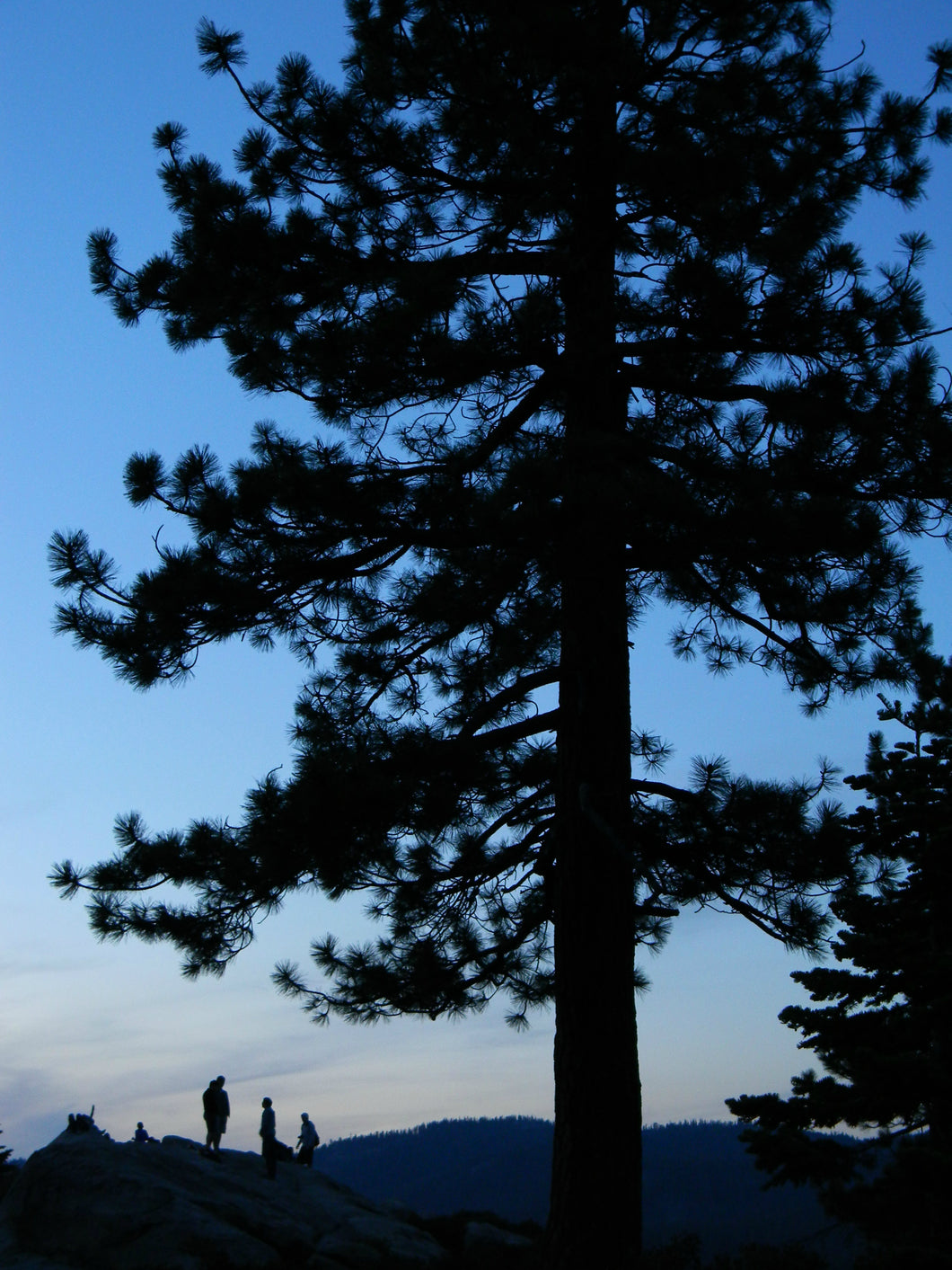 Jpeg Photo Download 233 Last Light - Sunset Tree Silhouette Yosemite National Park California