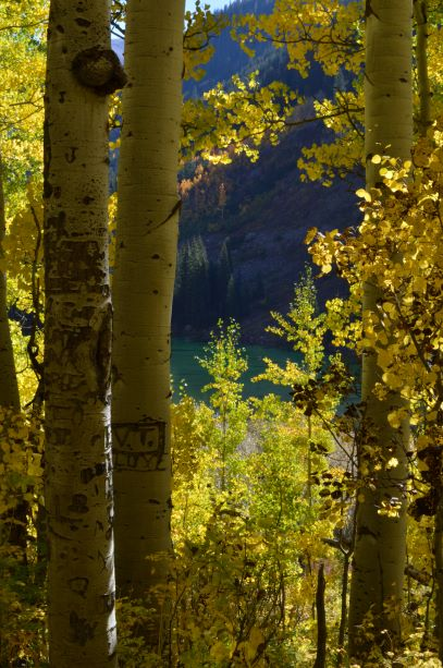 Jpeg Photo Download 250 Rocky Mountain Fall - Fall Leaves Maroon Bells Aspen Colorado