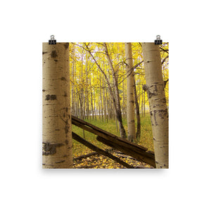 Fall Aspen Leaves  - 110 Strength -  Photo Print Poster