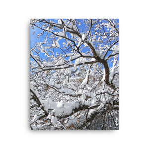 Colorado Trees in winter -103 Snow Day - Canvas Photo Print