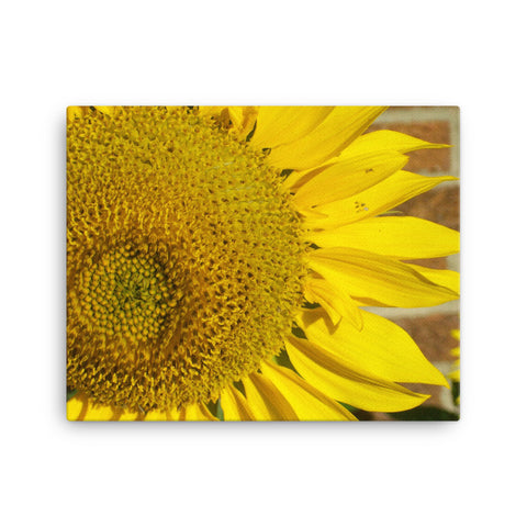 Yellow Sunflower - 105 Hidden - Canvas  Photo Print