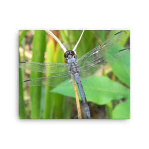Dragonfly - 107 Pixie Wings - Canvas Photo Prints