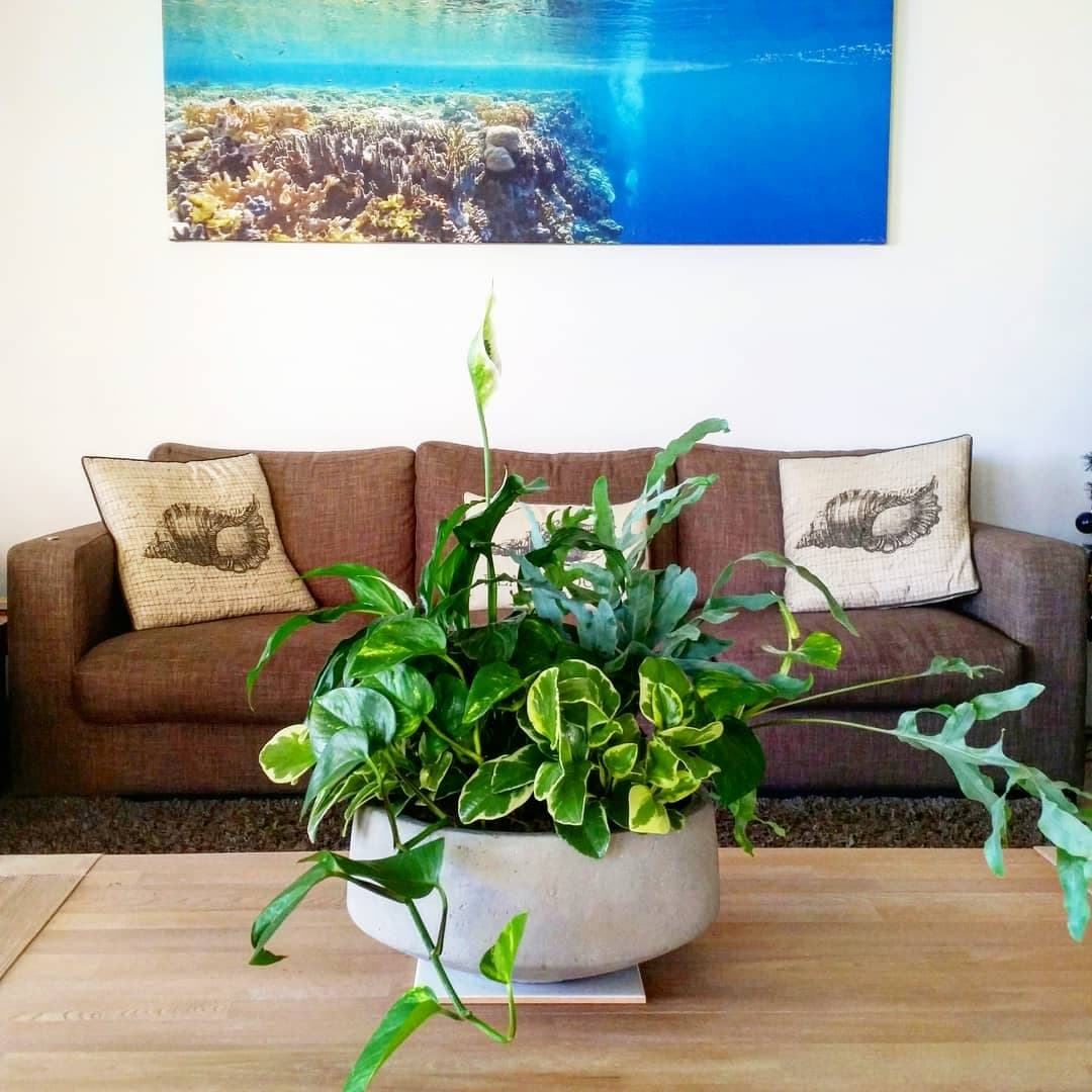 Indoor plants mass planted in a large concrete bowl styled on a wood coffee table with an ocean photograph on the wall behind it