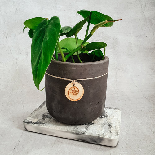 HEART LEAF PHILODENDRON (S) + PLANTER