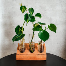 MARRI PROPAGATION CRADLE TRIO
