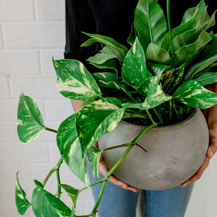 Botanical Wellness Bowl | Concrete Globe