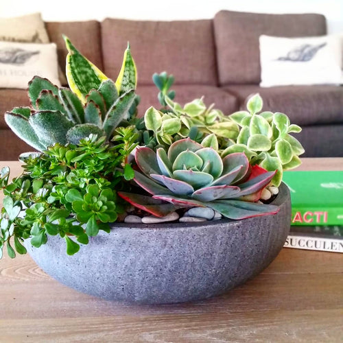 Succulent Wok Bowl | Medium