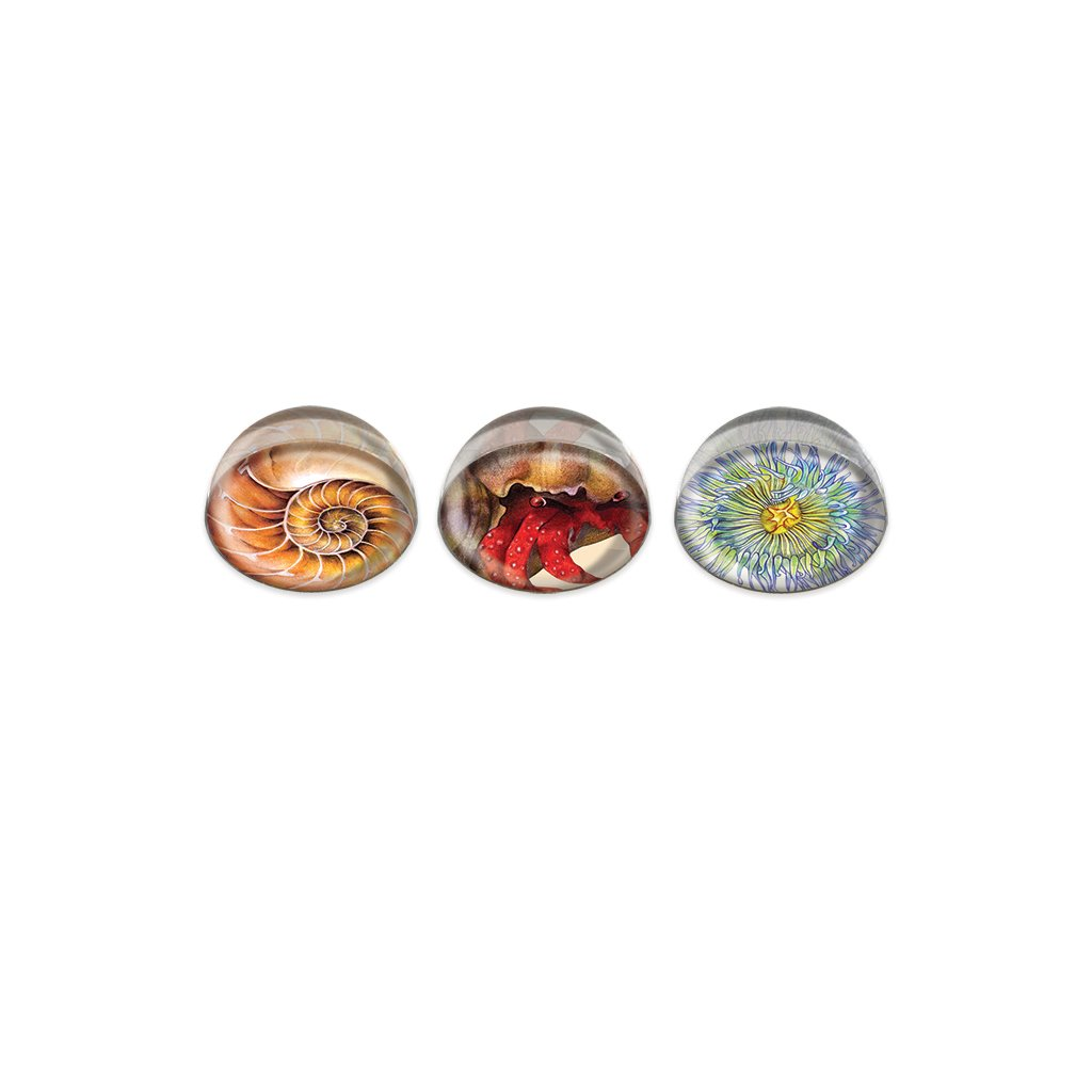 [0045-MGC] Invertebrate Cabochon Magnet or Paper Weight Set