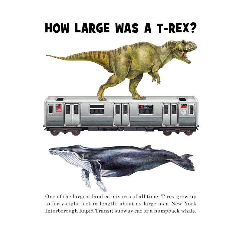 [SA-041] How Large T Rex Stock Art
