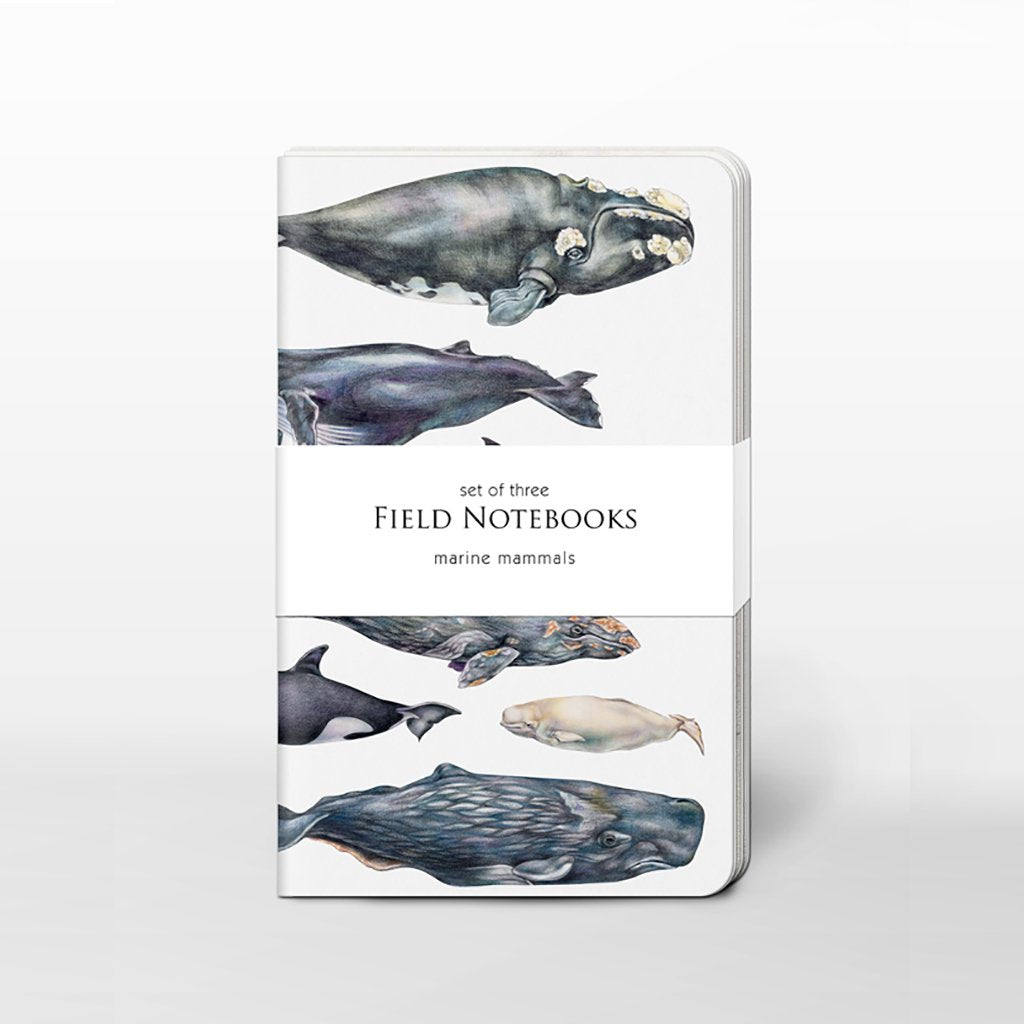 [0500C-SJ465] Marine Mammals Field Journal Set