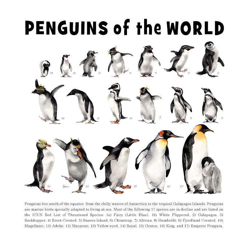 [SA-072] World Penguins Stock Art