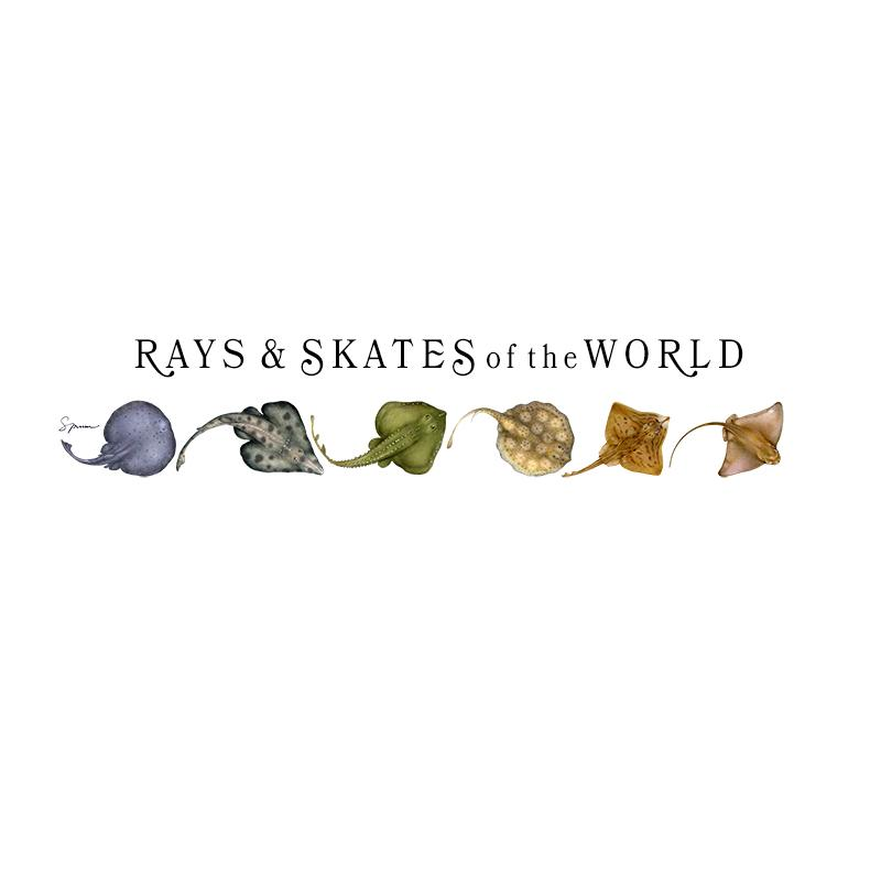 [SA-073] World Rays Skates Stock Art