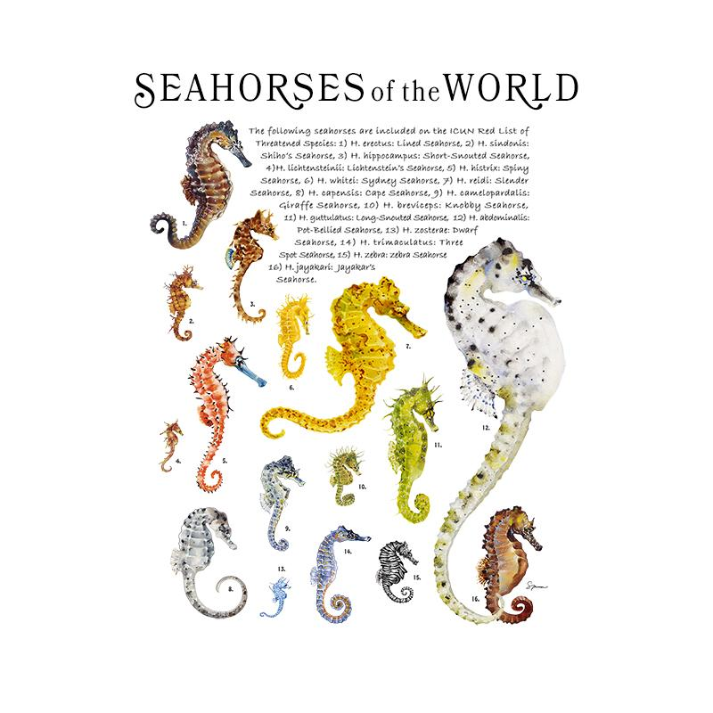 [SA-075] World Seahorses Stock Art