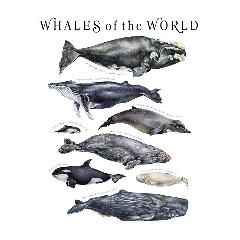 [SA-080] World Whales Stock Art