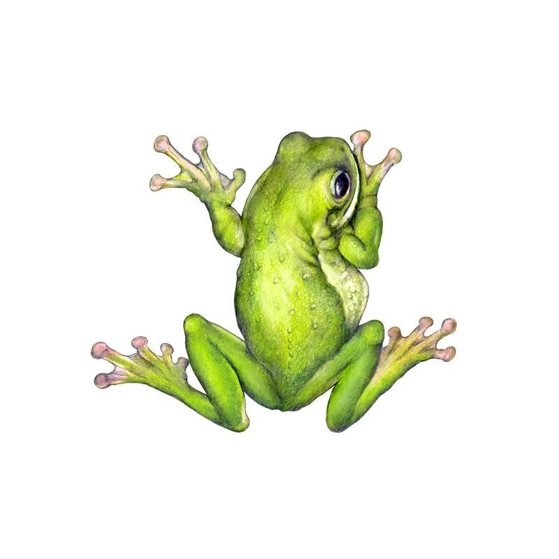 [SA-108] Giant Tree Frog Stock Art