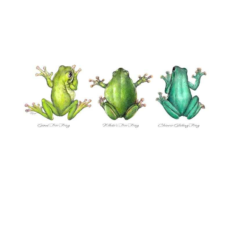 [SA-110] Frog Trio Stock Art