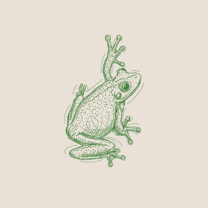 [SA-112] Frog 1 Sketch Stock Art*