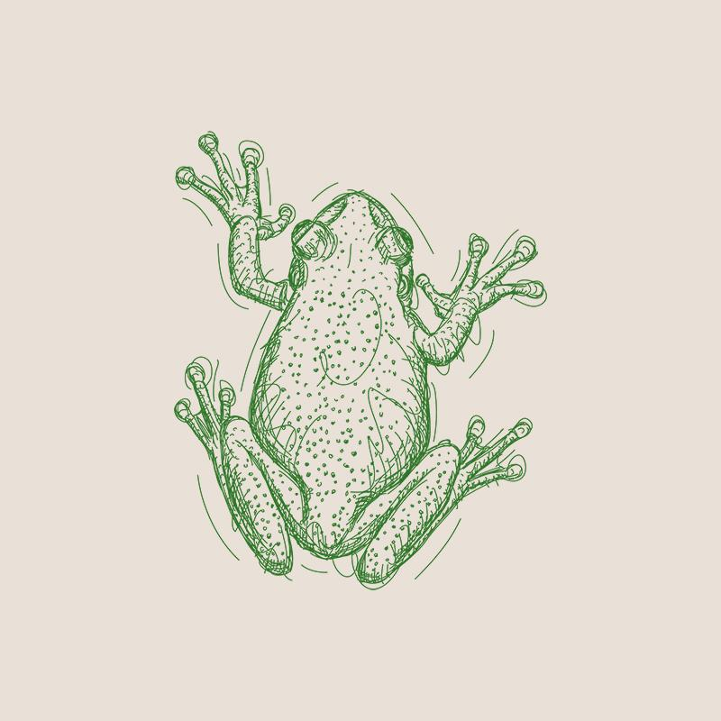 [SA-113] Frog 2 Sketch Stock Art*