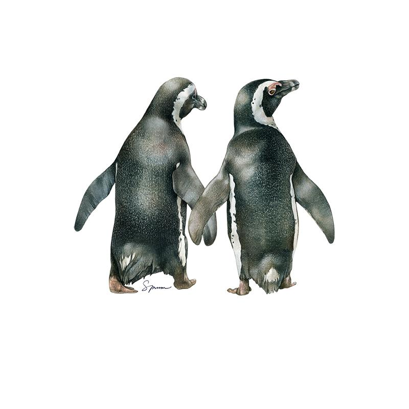 [SA-169] African Penguin Pair Stock Art