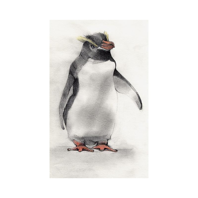 [SA-173] Erect Crested Penguin Stock Art