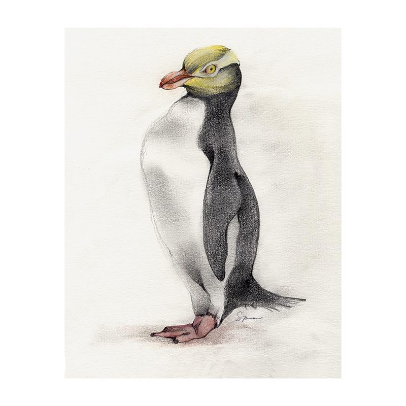 [SA-178] Yellow Eyed Penguin Stock Art