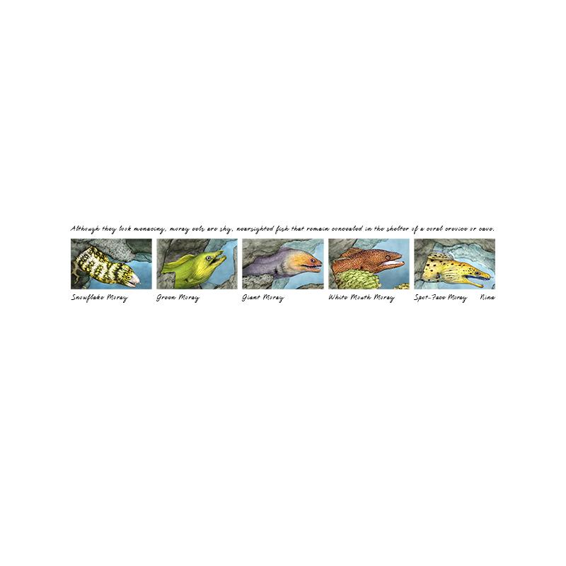 [SA-207] Moray Eels Stock Art