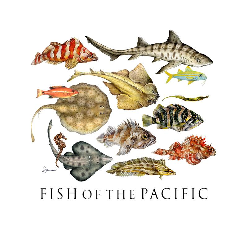 [SA-210] Fish of the Pacific Stock Art