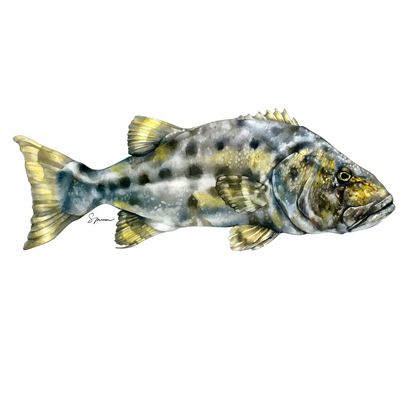[SA-232] Giant Bass Stock Art