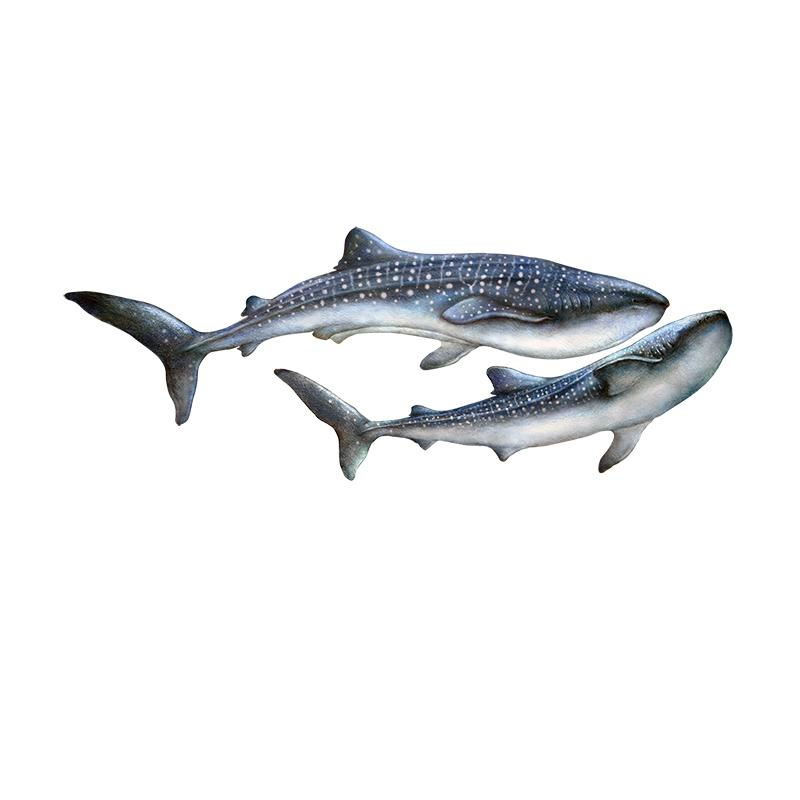 [SA-250] Whale Shark Duo Stock Art