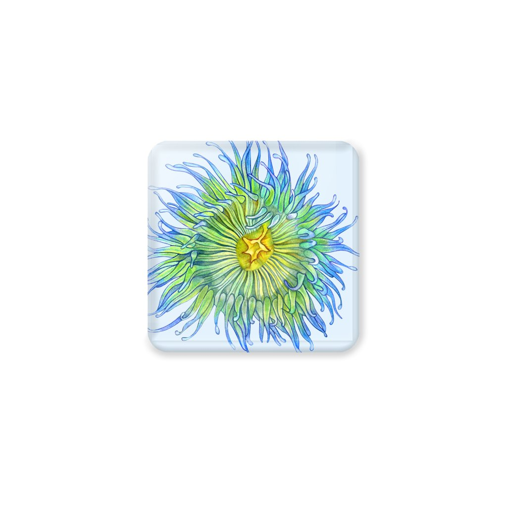 [CST-339] Green Sea Anemone Coasters