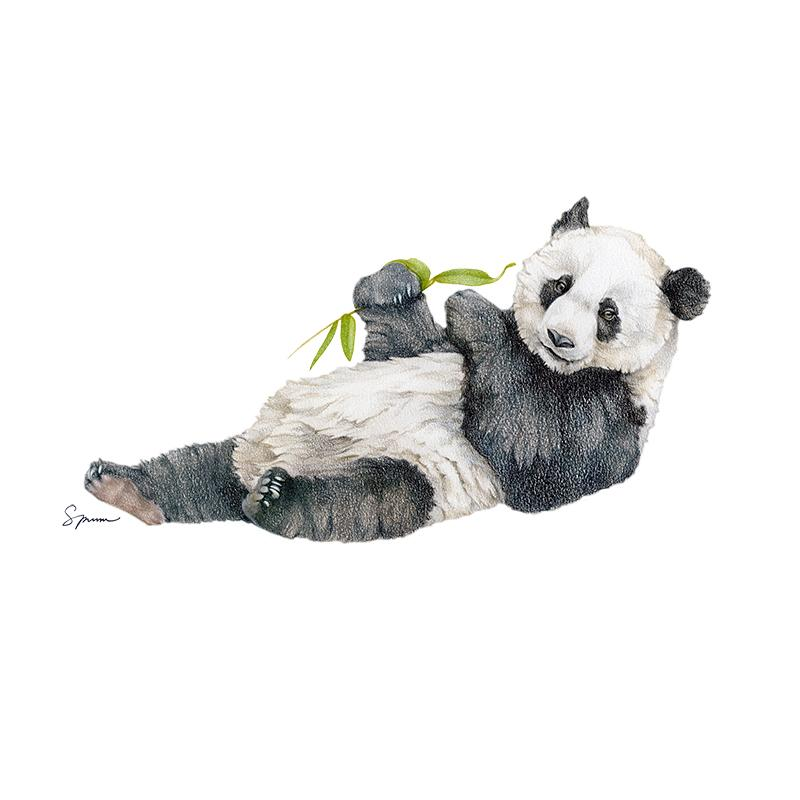 [SA-401] Giant Panda Juvenile Stock Art