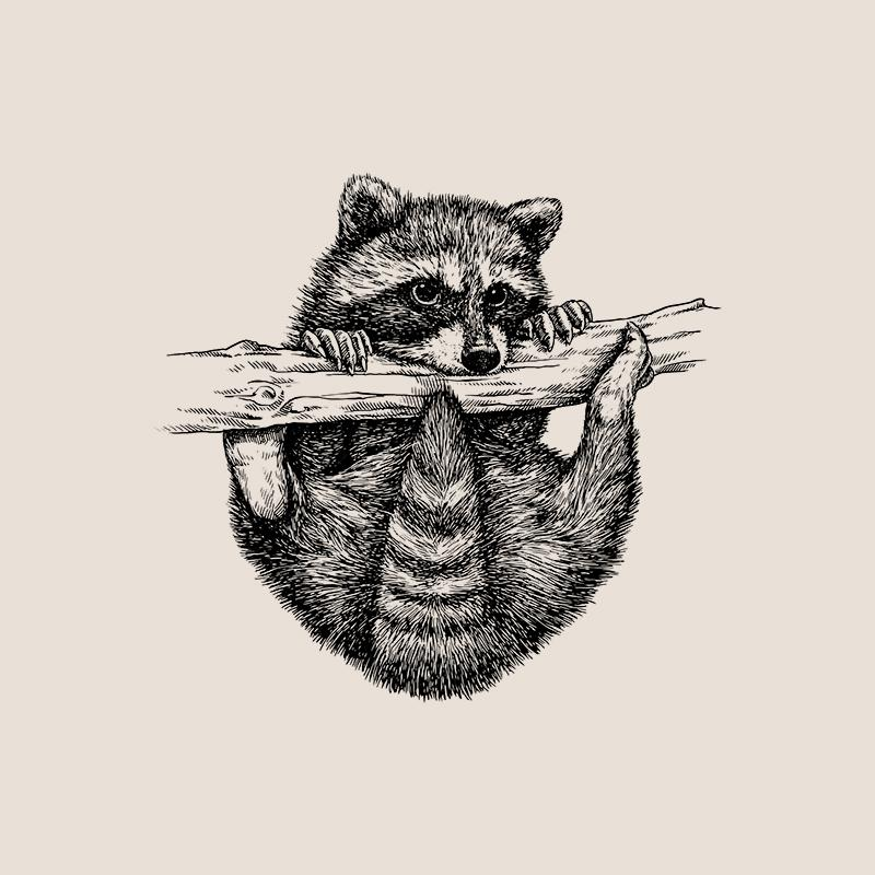 [SA-415] Raccoon Sketch Stock Art*