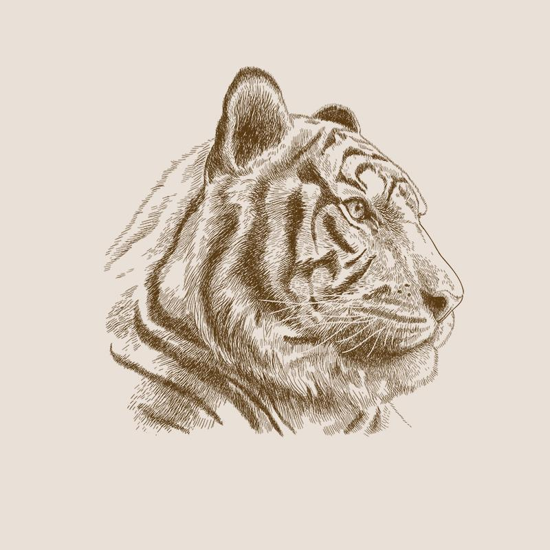 [SA-481] Tiger Portrait Sketch 2 Stock Art*