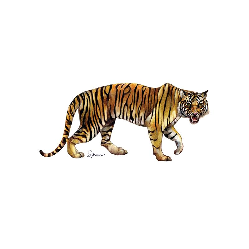 [SA-484] Tiger Bengal 1 Stock Art