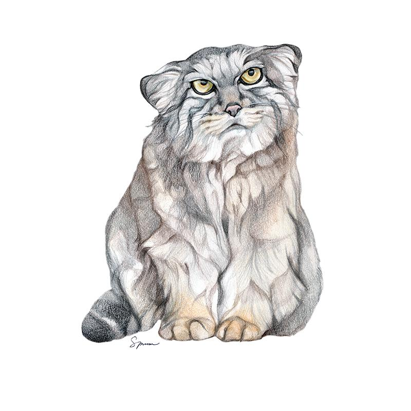 [SA-493] Pallas Cat Stock Art