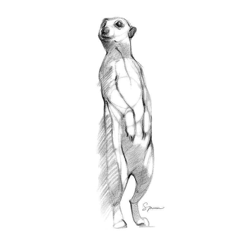 [SA-536] Meerkat Sketch Stock Art
