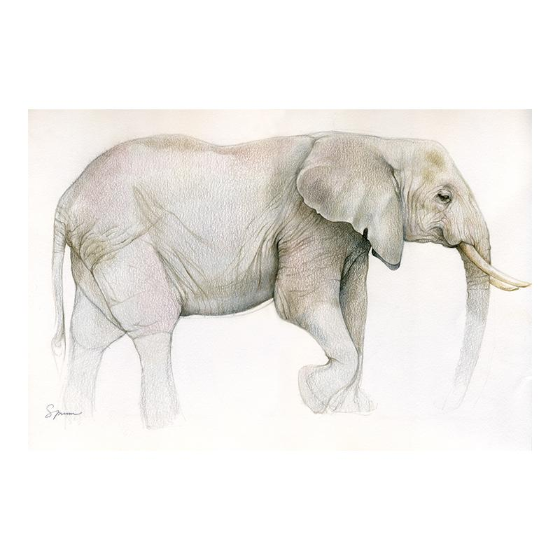 [SA-600] African Elephant Sketch Stock Art