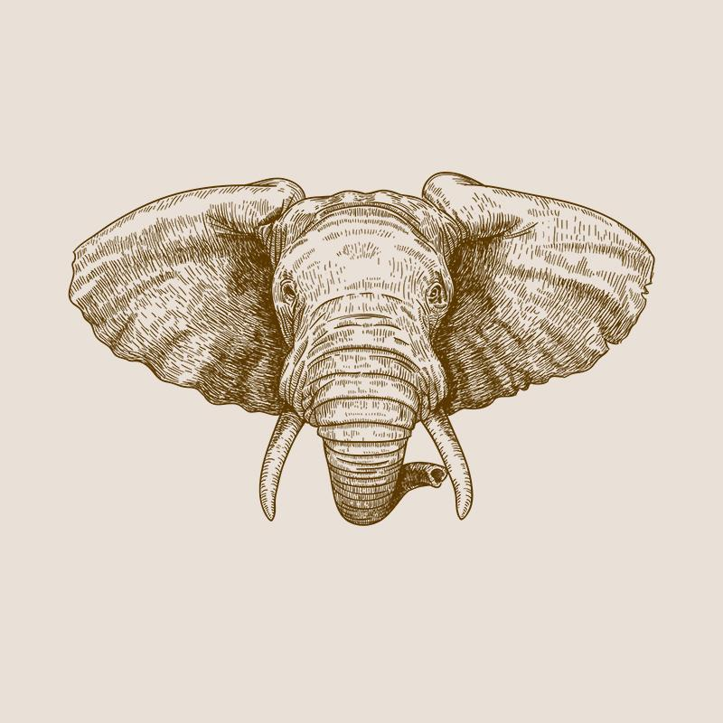 [SA-604] African Elephant Portrait Sketch Stock Art*