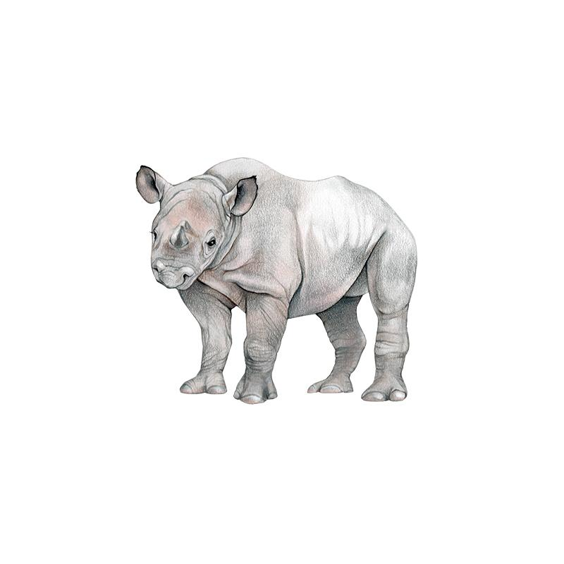 [SA-636] Black Rhino Calf Stock Art