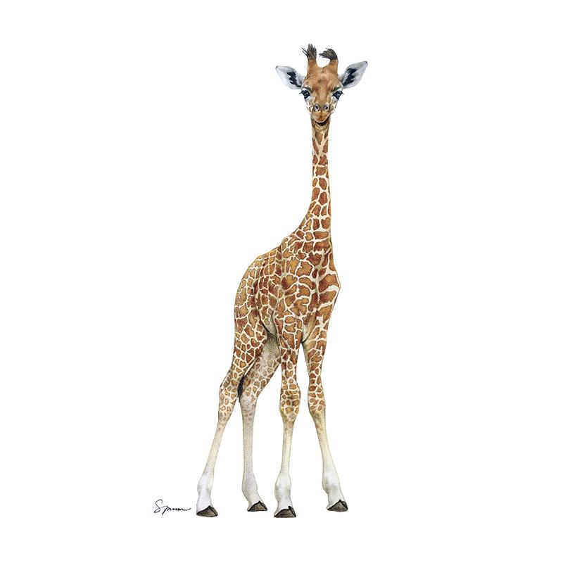 [SA-653] Giraffe Calf 3 Stock Art