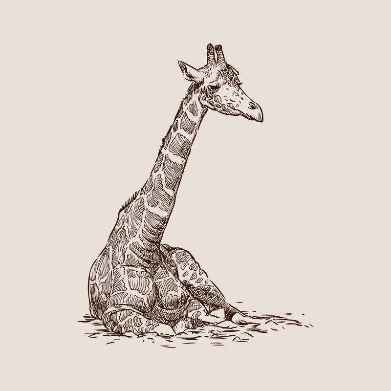 [SA-654] Giraffe Sitting Sketch Stock Art*