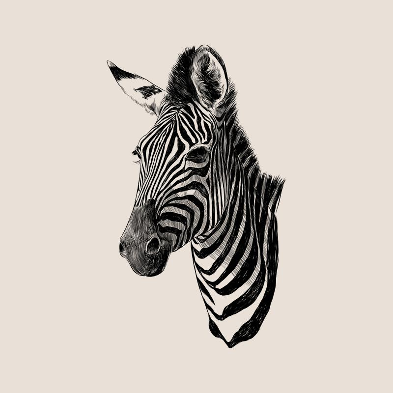 [SA-675] Zebra Portrait 1 Sketch Stock Art*