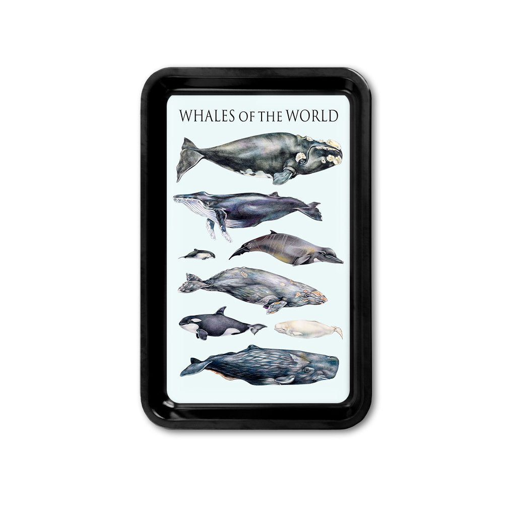 [TRYR-080] Whales of the World Retro Tray