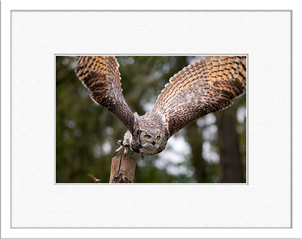 Steve Gordon : First Flight - Limited Edition Photographic Print