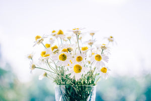 8 things you should know about chamomile