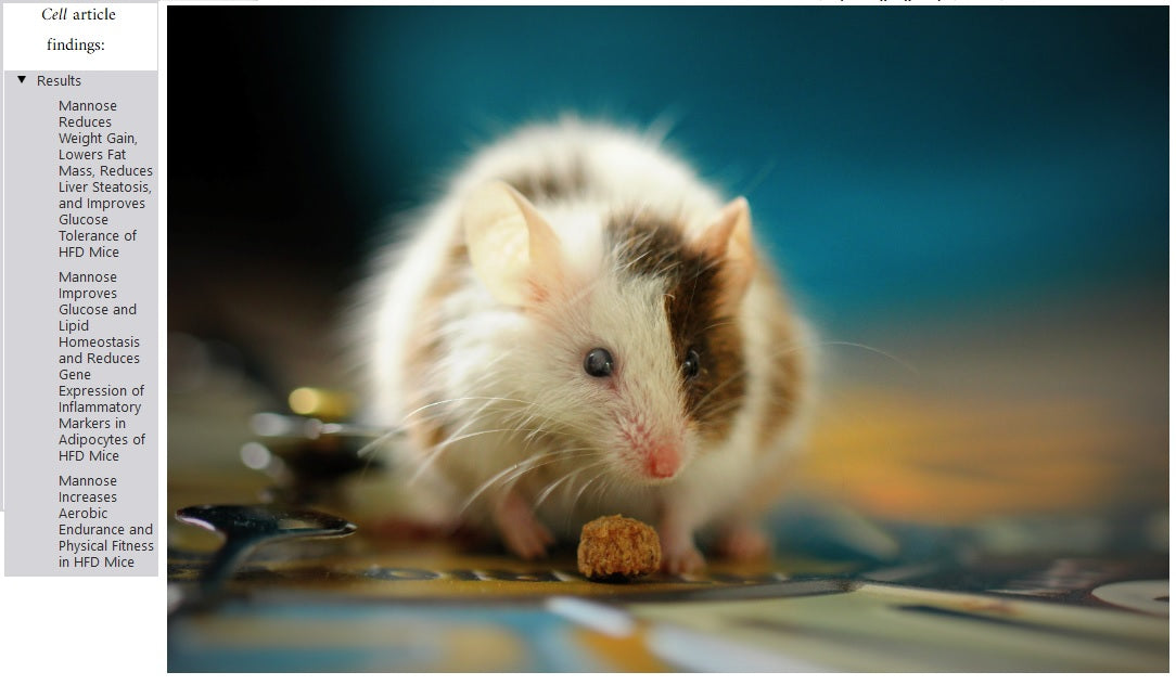 Mice biology mimics human