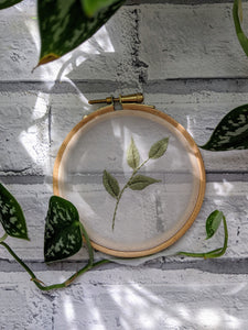 "4"" See Through Botanical embroidery hoop"