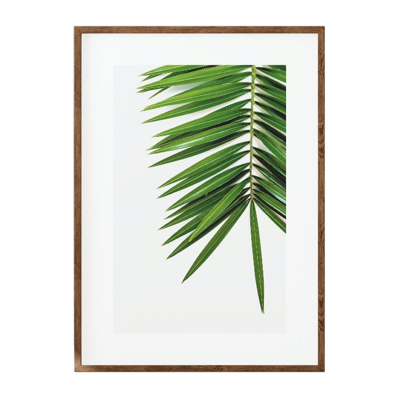 AFRICAN DATE PALM PHOTOGRAPHIC PRINT