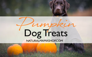 Pumpkin Dog Treat Recipe | Gluten Free